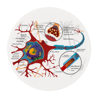 Neurons Nerve Healthy Edible Frosting Rounds