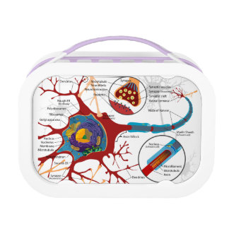 Neurons Nerve Healthy Lunch Box