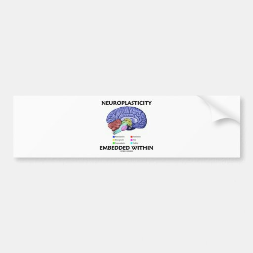 Neuroplasticity Embedded Within (Brain Anatomy) Bumper Stickers