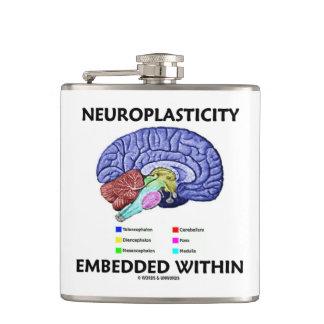 Neuroplasticity Embedded Within (Brain Anatomy) Hip Flask