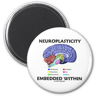 Neuroplasticity Embedded Within (Brain Anatomy) Magnet