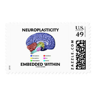 Neuroplasticity Embedded Within (Brain Anatomy) Postage
