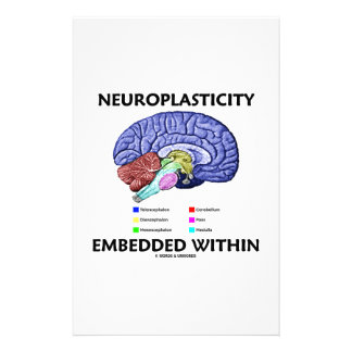 Neuroplasticity Embedded Within (Brain Anatomy) Stationery