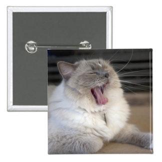 Neva Masquerade cat yawning Pinback Buttons