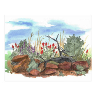 Nevada Desert Indian Paintbrush Watercolor Postcard