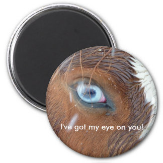 Nevada Horse Eye during snowstorm Magnets