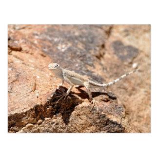 Nevada Lizard Looking at You! Postcard