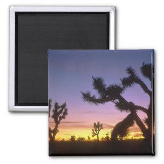 NEVADA. LOS E.E.U.U. Brevifolia de la yuca de las  Iman