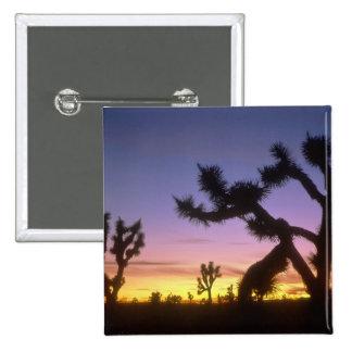 NEVADA. LOS E.E.U.U. Brevifolia de la yuca de las  Pin