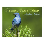 Nevada State Bird - Mountain Bluebird Postcard