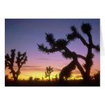 NEVADA. USA. Joshua trees Yucca brevifolia) Greeting Card