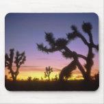 NEVADA. USA. Joshua trees Yucca brevifolia) Mouse Pad