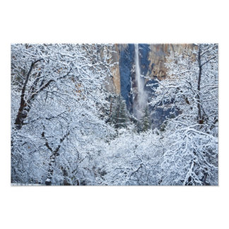 Nevadas frescas en los árboles debajo de Bridalvei Impresión Fotográfica