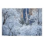Nevadas frescas en los árboles debajo de Bridalvei Fotografía