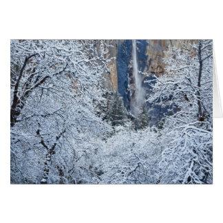 Nevadas frescas en los árboles debajo de Bridalvei Tarjetón