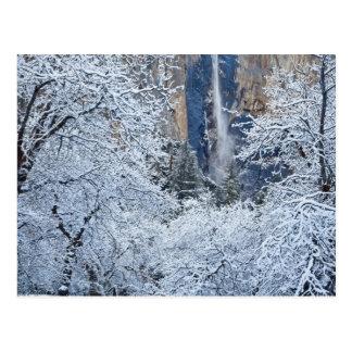 Nevadas frescas en los árboles debajo de Bridalvei Postal