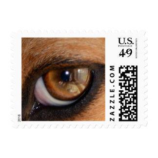 Never Lose Sight Beagle Dog Eye Postage