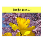 New Address postcards We Moved Daffodils