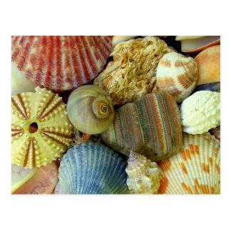 New Address Sea Urchin and Seashells Postcard