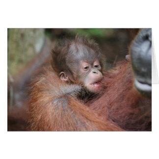 New Baby Orangutan, Son of Akmad Card
