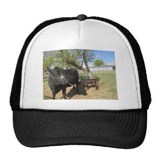 New Baby Trucker Hat