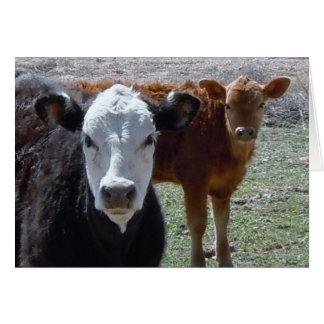 New Baby Wrangler - Western Cattle Calves Card