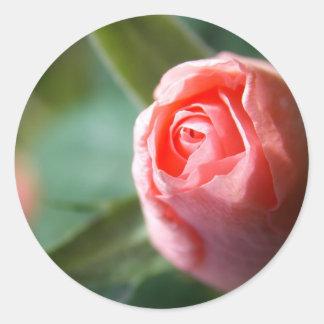 New Beginning Rose Classic Round Sticker