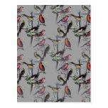 New Birds pattern accessories, vintage art grey Postcard