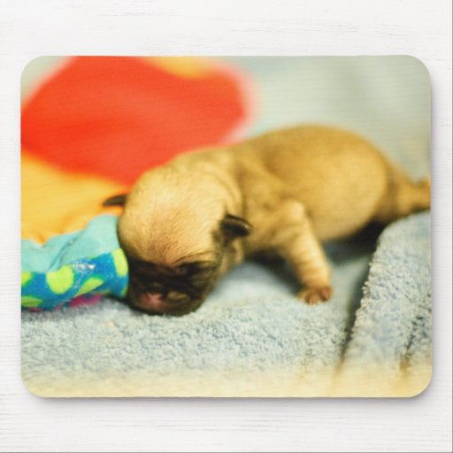 New Born Baby Pug Dog Mouse Pad