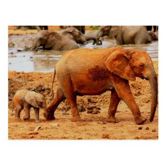 new born calf and elephant postcard