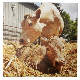 New born calf and mom ceramic tile