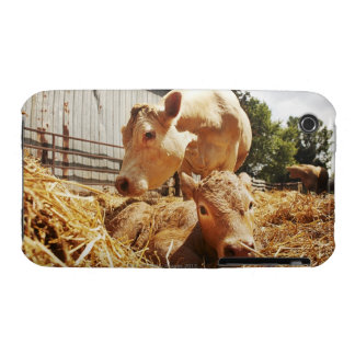 New born calf and mom iPhone 3 covers