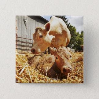 New born calf and mom pinback button