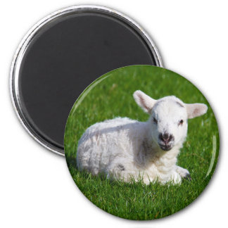 New born cute lamb on green grass 2 inch round magnet
