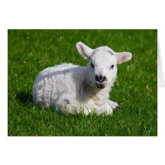 New born cute lamb on green grass card