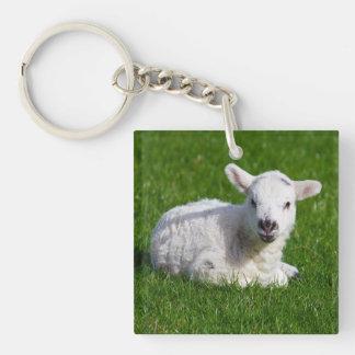 New born cute lamb on green grass keychain