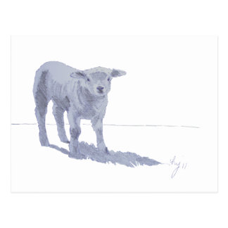 New born lamb pencil sketch postcard