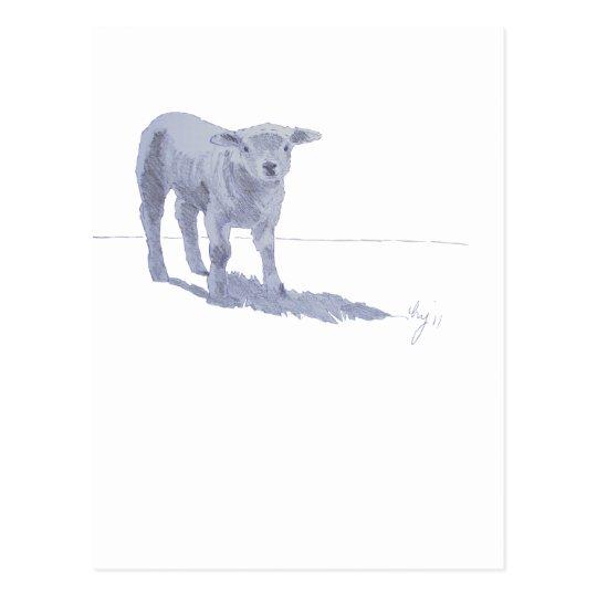 New born lamb pencil sketch postcard