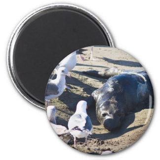 New Bprn Elephant Seal 2 Inch Round Magnet
