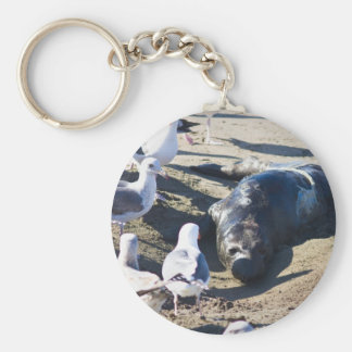 New Bprn Elephant Seal Keychain