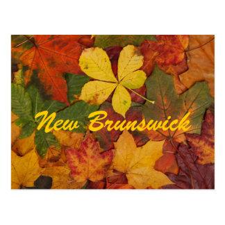 New Brunswick Autumn Leaves Postcard