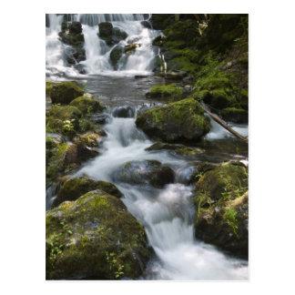 New Brunswick, Canada. Dickson Falls in Fundy Postcard