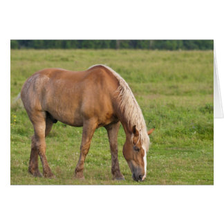 New Brunswick, Canada. Horse in field. Card