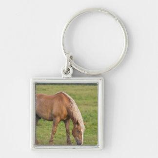New Brunswick, Canada. Horse in field. Silver-Colored Square Keychain