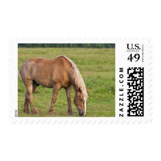 New Brunswick, Canada. Horse in field. Postage