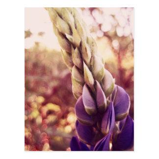 New Brunswick Flowers Postcard