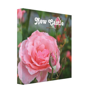New Castle Rose Garden Gallery Wrapped Canvas