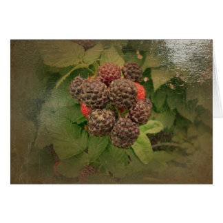 New Day Gardens Notecard- Black Raspberries A Card