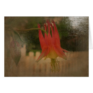 New Day Gardens Notecard CAN Columbine A