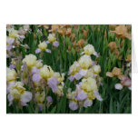 New Day Gardens Notecard- Iris 'Enriched' Cards